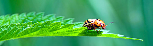 managing insects in your garden